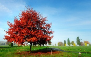 Random: Red Beauty Autumn Park