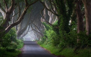 Trees Road Trunk Plant Ireland wallpapers and stock photos