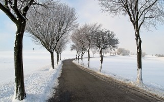 Trees Snow Fields Road wallpapers and stock photos