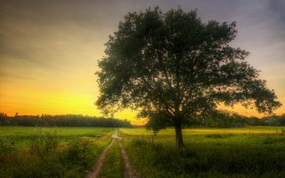 Field Plant Trees Path Morning wallpapers and stock photos