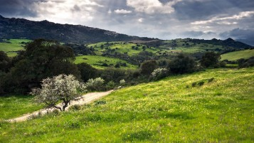 Hills Trees Fields Walk Way wallpapers and stock photos