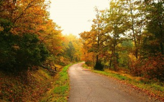 FootPath Through Autumn Forest wallpapers and stock photos