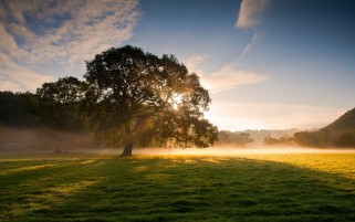 Tree Sunlight Foggy Grass wallpapers and stock photos