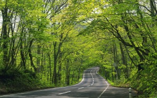 Sunny Forest & Road wallpapers and stock photos