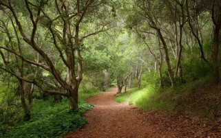 Forest Trees Path Leaves Plant wallpapers and stock photos