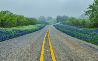 Random: Road Flowers Trees Fog Texas