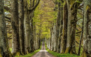 Trees Alley & Steeply Road wallpapers and stock photos