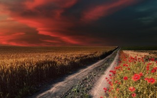 Random: Red Sky Path Field Poppies