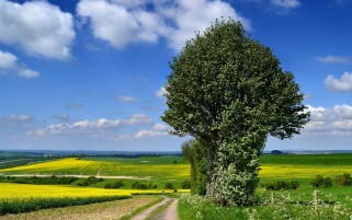 Trees Fields Path Clouds Sky wallpapers and stock photos