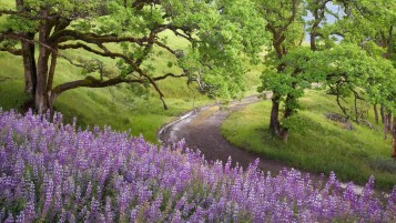 Lupine Flowers Trees Path Gras wallpapers and stock photos
