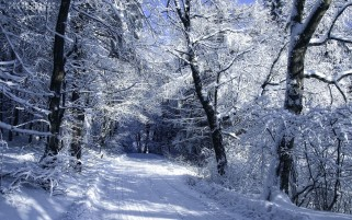 Snowy Forest Road Winter wallpapers and stock photos