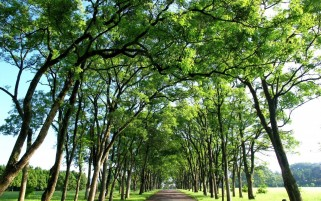 Random: Top Trees Branches Road