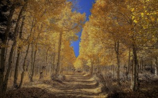 Autumn Trees Forest Way wallpapers and stock photos