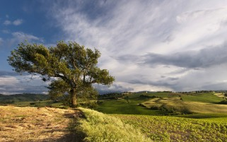 Felder Baum Gras-Himmel-Wolken wallpapers and stock photos