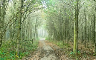 Forest Path Foliage Plants wallpapers and stock photos