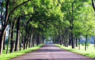 Trees Alley Road Grass Taiwan wallpapers and stock photos