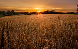 Previous: Wheat Field Sunset Forest