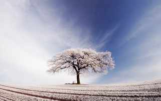 Arable Tree Snow Sky wallpapers and stock photos