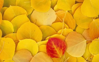 Fallen Autumn Leaves wallpapers and stock photos