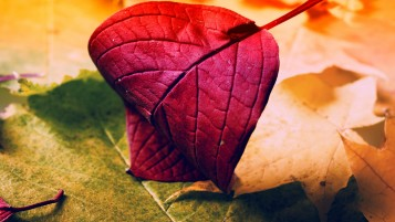 Red Leaf wallpapers and stock photos