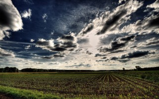 Clouds Sky Field Seed Grass wallpapers and stock photos