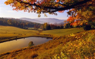 Autumn Trees Fields Swamp wallpapers and stock photos