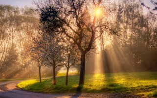 Trees Sun Beams Path Grass wallpapers and stock photos