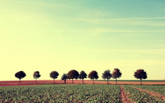 Trees Fields Way Plants Sky wallpapers and stock photos