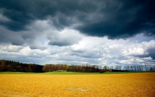 Previous: Yellow Field Storm Clouds Tree