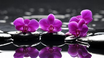 Purple Flowers on Rocks wallpapers and stock photos