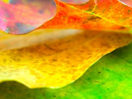 Autumn Leafs wallpapers and stock photos