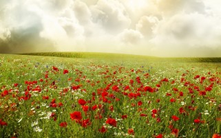 Poppies Field Hills & Clouds wallpapers and stock photos