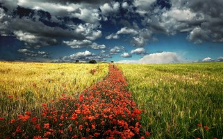 Random: Poppies Fields Sky & Clouds