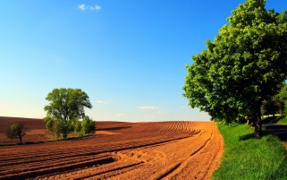 Arable Trees Road Grass & Sky wallpapers and stock photos