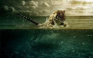Tiger Water Leap Fishes wallpapers and stock photos