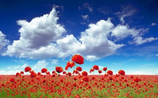 Poppies Field Sky & Clouds wallpapers and stock photos