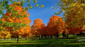 Orange Autumn wallpapers and stock photos