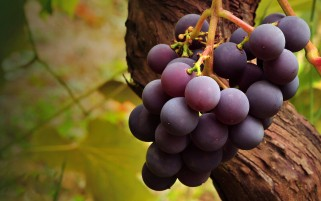 Rose Grapes wallpapers and stock photos