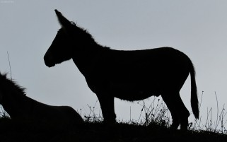 Donkey wallpapers and stock photos