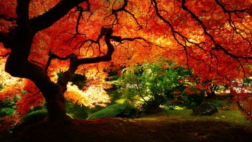 Beautiful Autumn Tree wallpapers and stock photos