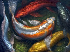 Koi Water Painting Artwork wallpapers and stock photos