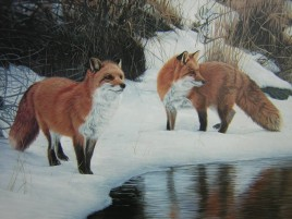 Foxes Snow Water Gras Painting wallpapers and stock photos