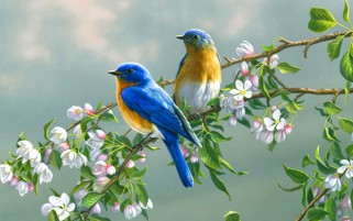 Birds Branches & Blossoms wallpapers and stock photos