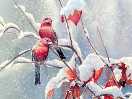 Red Birds Snow Branches Leaves wallpapers and stock photos