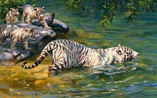 White Tigers Bathing Sea wallpapers and stock photos