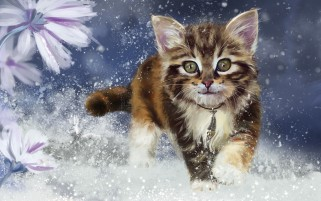 Sweet Kitty Cat Snowy Flowers wallpapers and stock photos