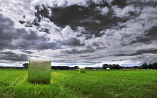 Random: Green Field Purple Clouds Hay