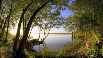 Lake Forest Trees Branch Shore wallpapers and stock photos