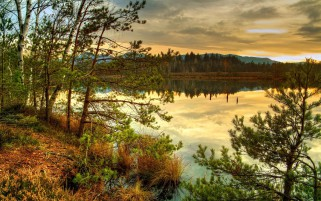 Nice Scenery Trees & Lake wallpapers and stock photos