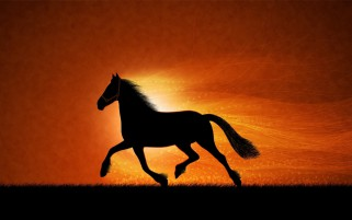Horse At Sunset Silhouette wallpapers and stock photos